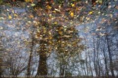 Yellow October, Zolty pazdziernik,