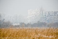 Winter at Lower Meadows, Zima na Niskich Lakach