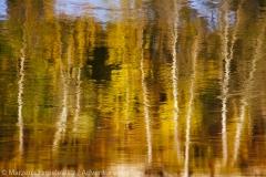 Birches, Brzezina