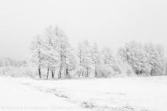 Zima Krogulec