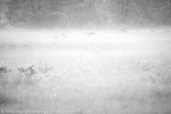 Sarna i mgla, Gorki