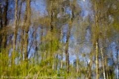 Sunken Forest, Zatopiony las