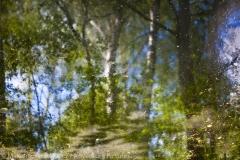 Forest in the Water, Las w wodzie