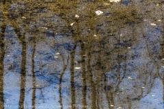 Sinking Trees, Zatopione drzewa
